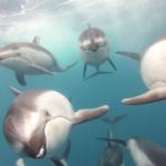 Unterwasseraufnahme GoPro Delphine
